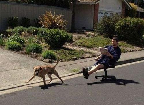 sin lazy dog walking funny