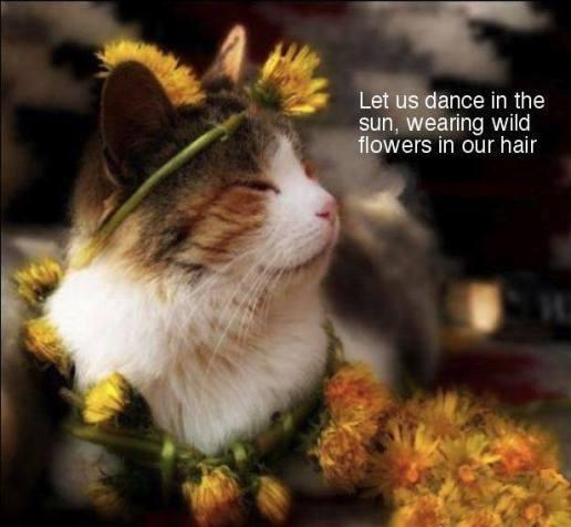 cat bohemian