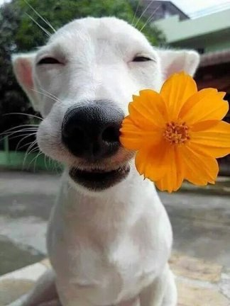 happy smile dog and flower animal pet