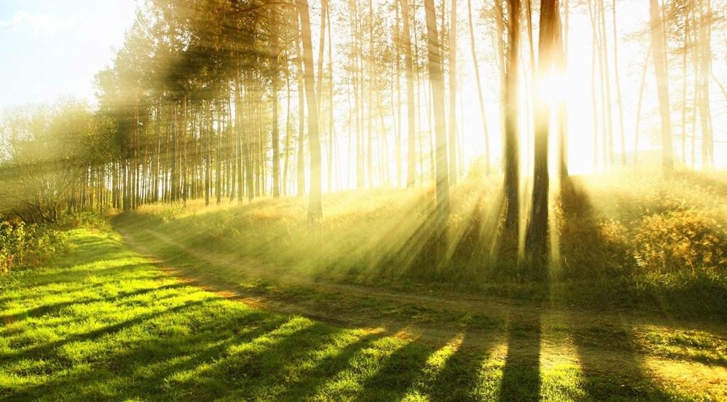 Sunrise-10-Beautiful Trees-in-the-Morning1