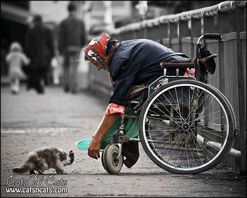 kindness kind cat lady old wheelchair