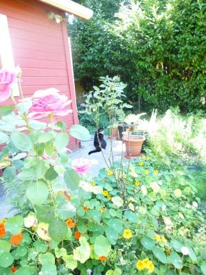 mario cat in garden
