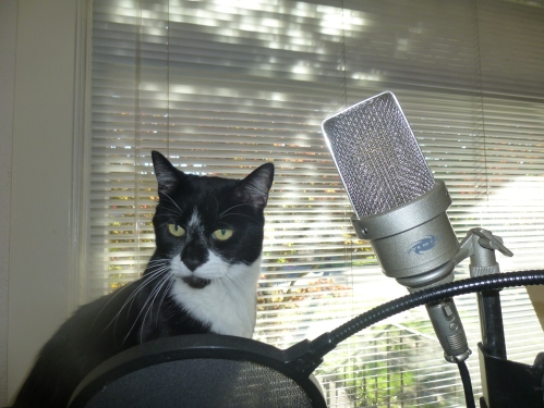 mario my famous cat sing song