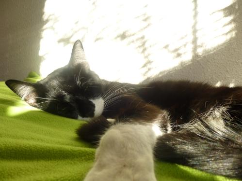 mario sleep nap sun
