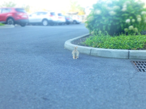 bunny rabbit in parking lot