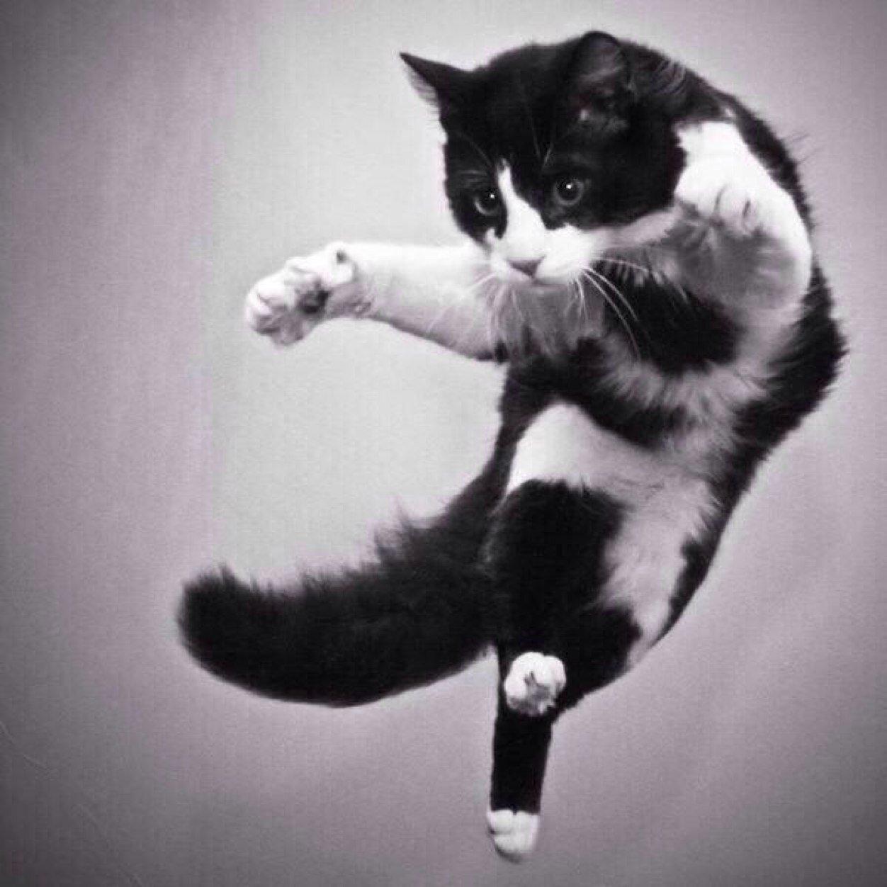 cat dance 1