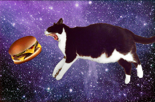 cat space burger