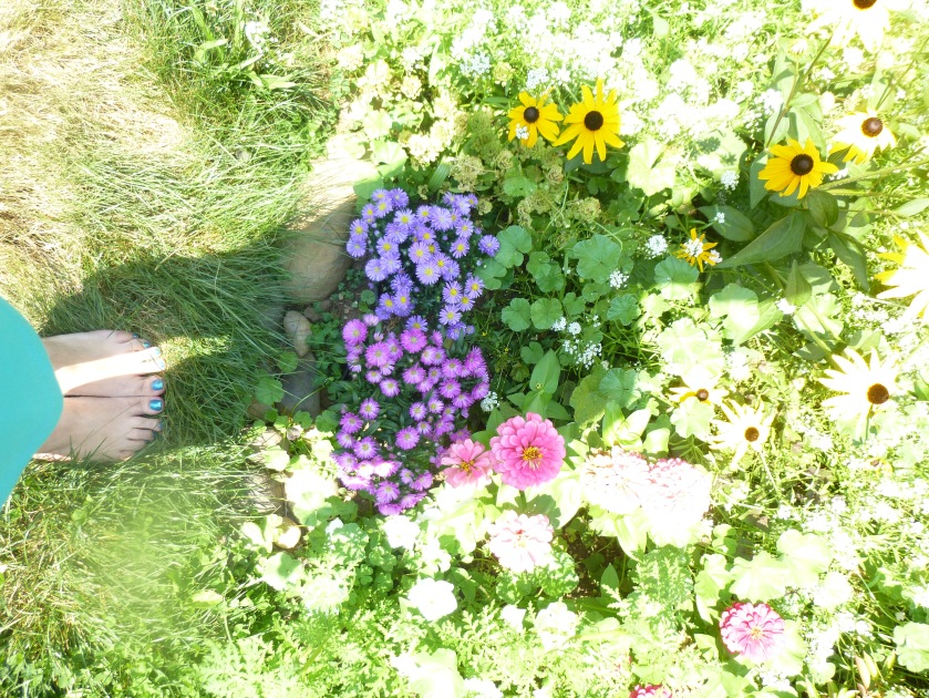 flower shadow july summer