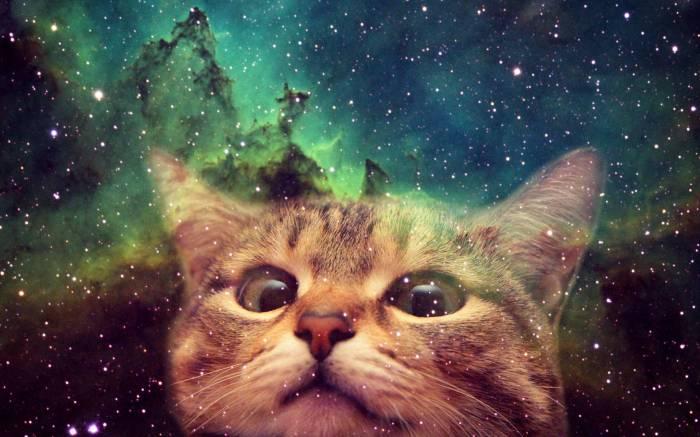 space cat face