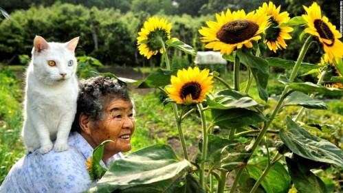 cat lady sunflowers friends pet