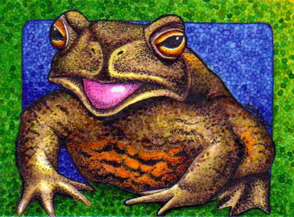 The Wild Toads of Borneo