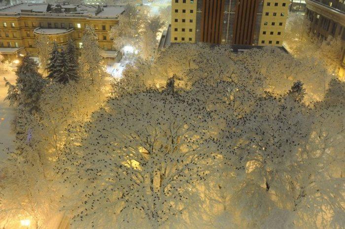 frozen-crows-portland