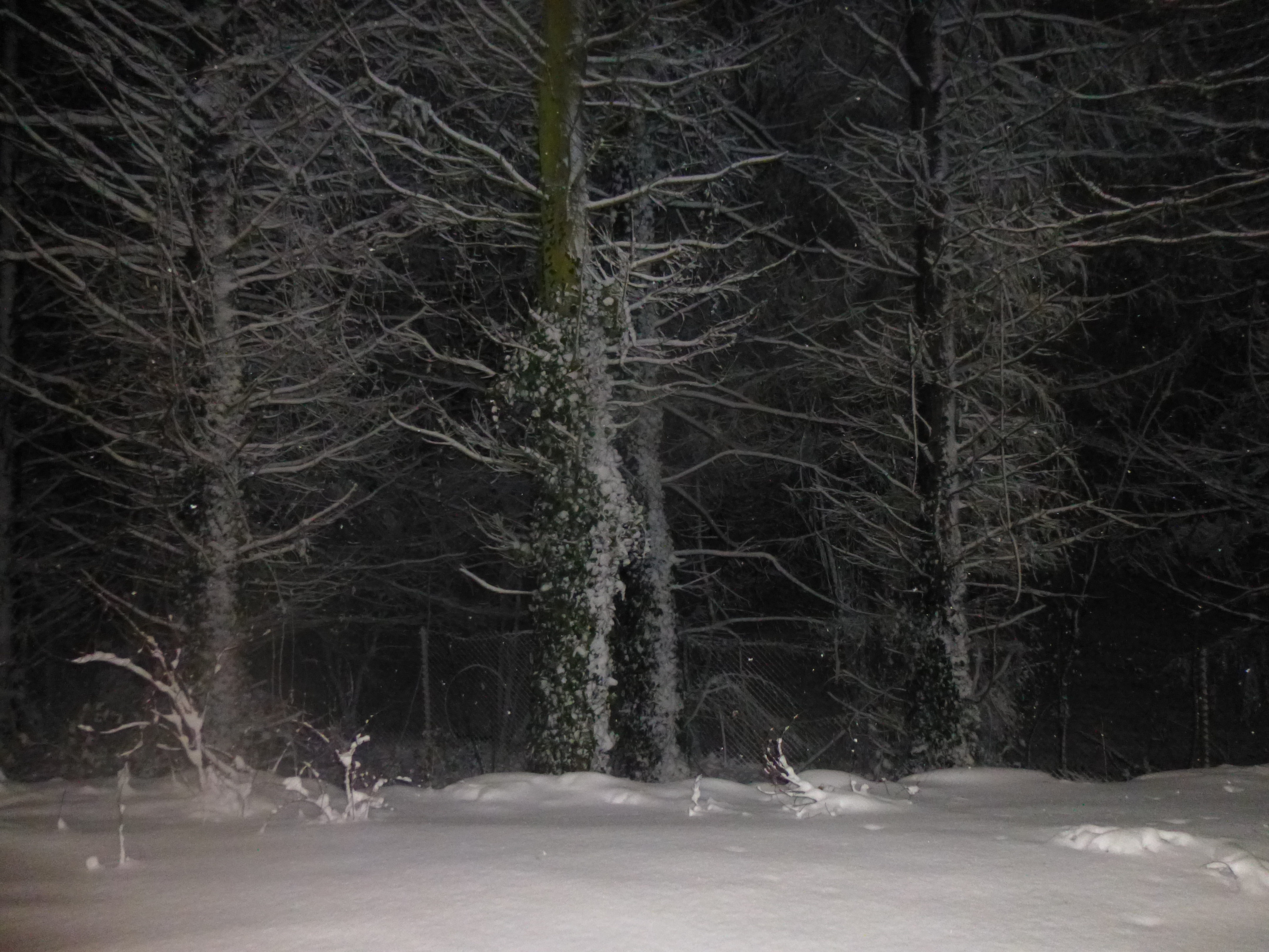 night-snow