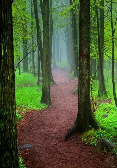 forest-path-trees-green-nature