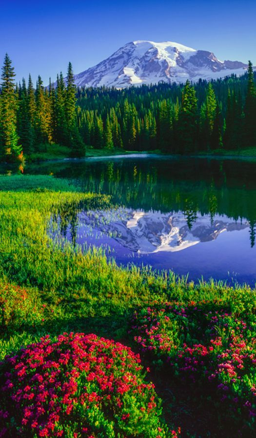 Mt. Ranier. Washington State, USA.