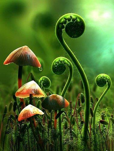rain forest mushrooms and fiddleheads grass